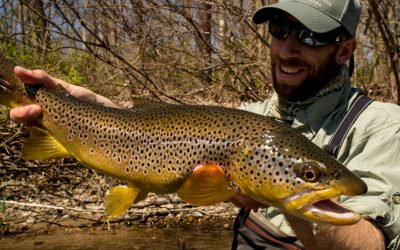 Wild vs Stocked : The Hierarchy of Trout in Pennsylvania