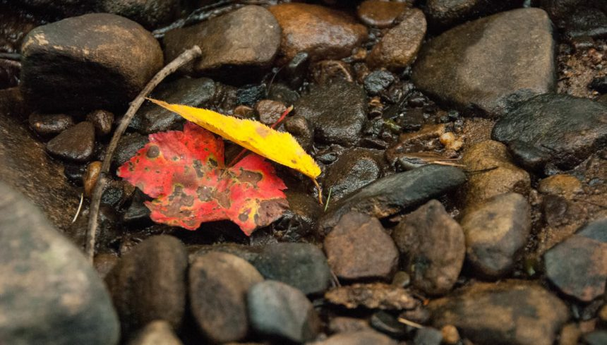 austin-dando-leaf-and-rocks