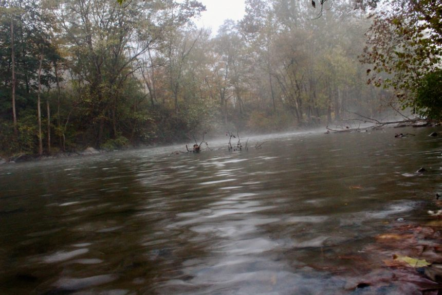 bill-dell-river-fog