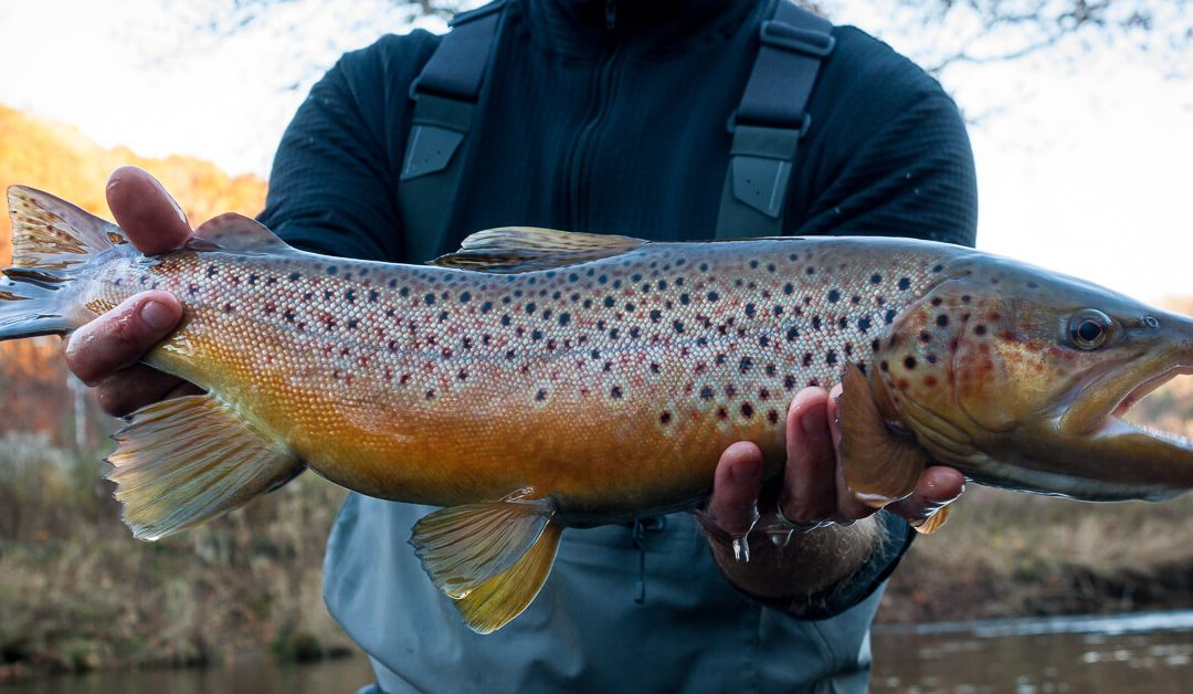Pattern vs Presentation | Trout eat anything, but sometimes they eat another thing better