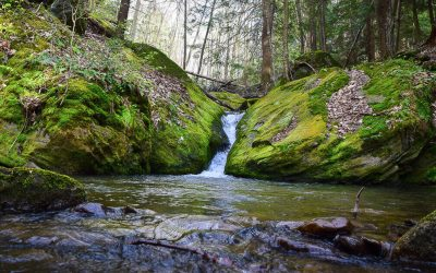 What happened to Laurel Run? The story of a stocked trout stream and a fisherman