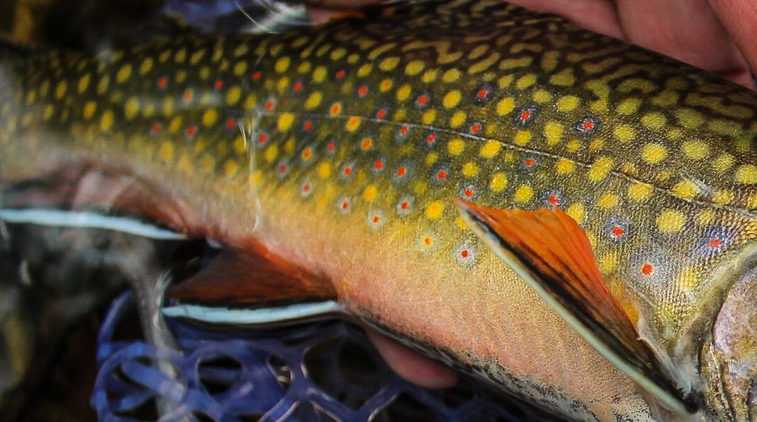 The Pennsylvania Wild Trout Summit is Coming