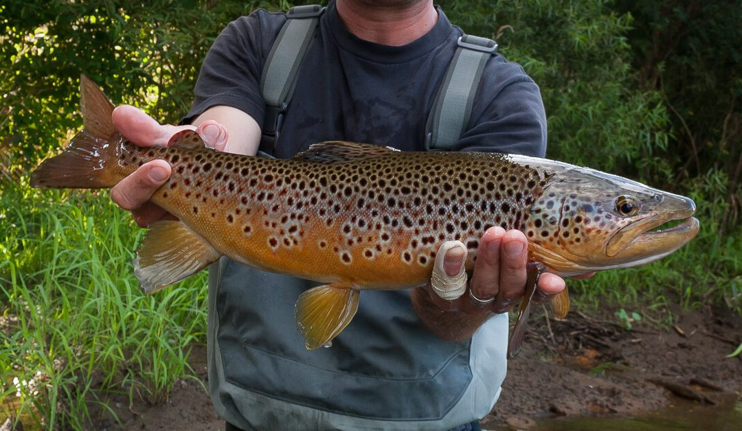 Why Wild Trout Matter