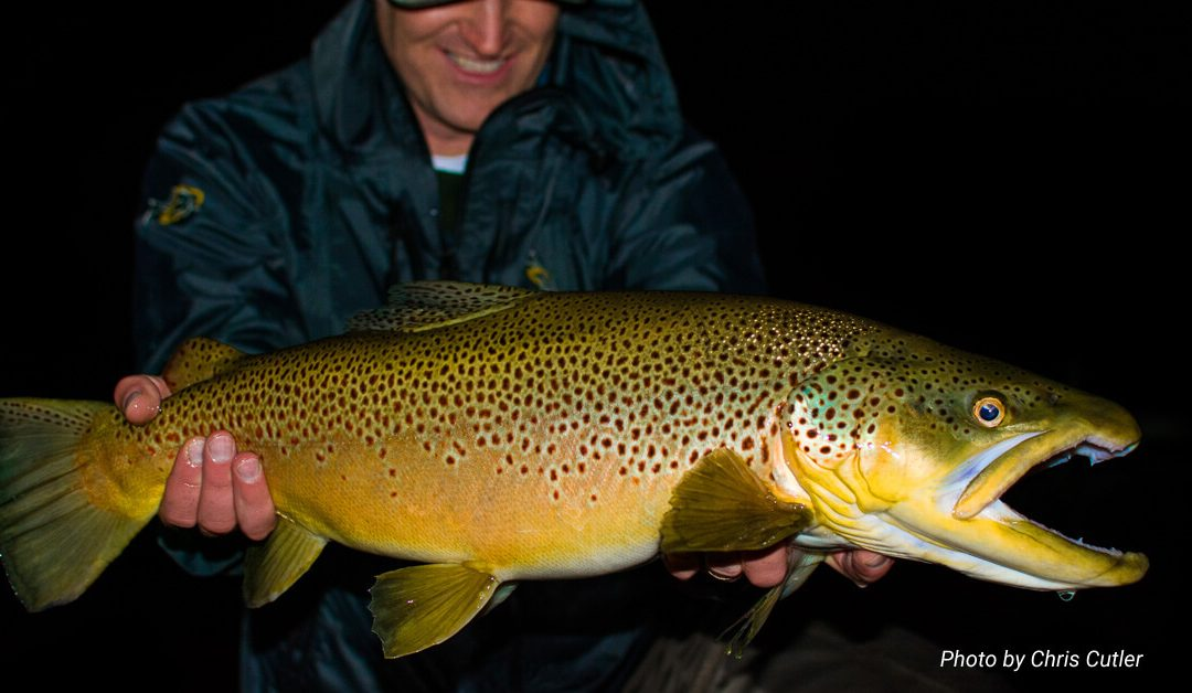 Super-Prime Lies and Big Trout | The Spots Within the Spots