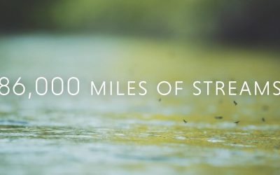 Streamside | 86,000 Miles and the Unassessed Waters Initiative
