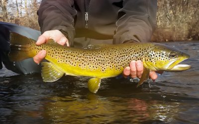 Fifty Fly Fishing Tips: #18 — Imagine a Target — Fish to the Fish