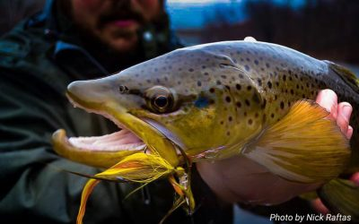 Fifty Fly Fishing Tips: #29 — Read Trout Water