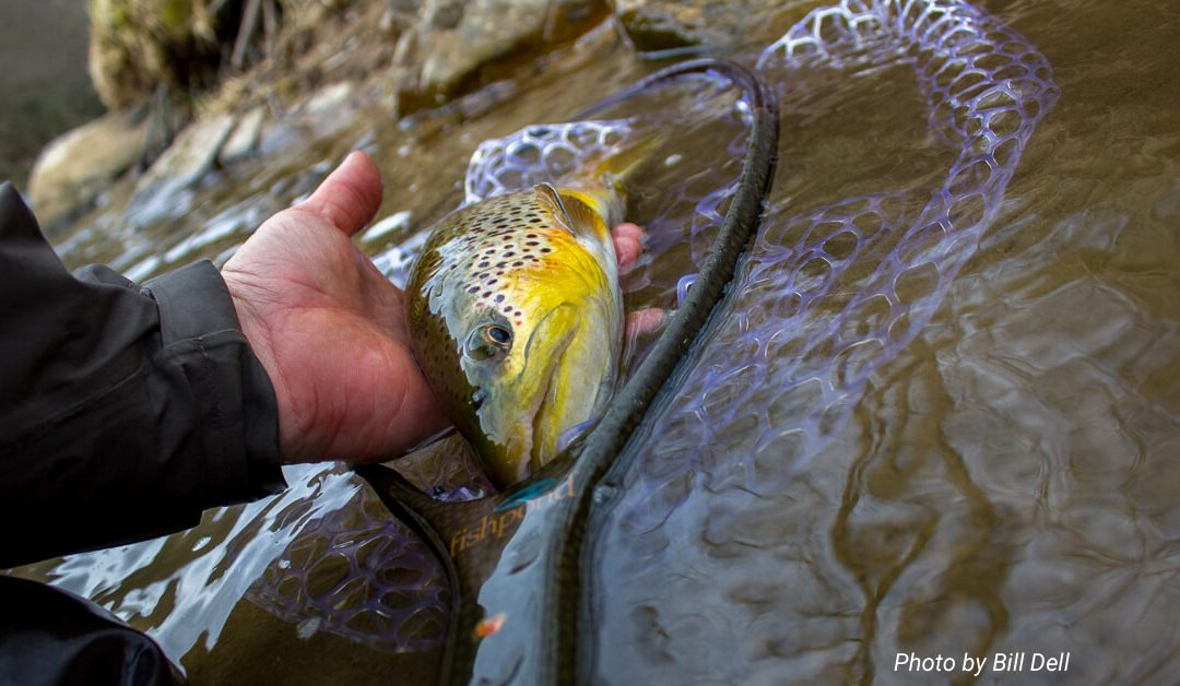 Fifty Fly Fishing Tips: #37 — Zoom in and think smaller