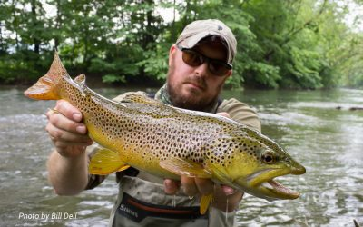 Fifty Fly Fishing Tips: #50 — Fish Hard
