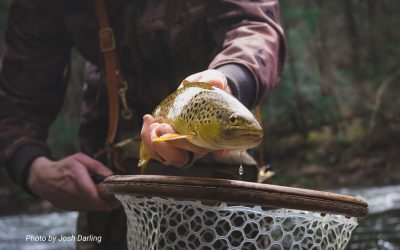 Fly Fishing in the Winter — The Go-To Nymphing Rig