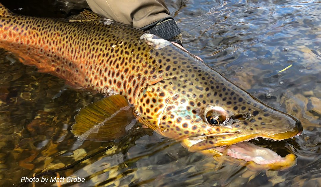 Fighting Big Fish — Work with a trout and not against it