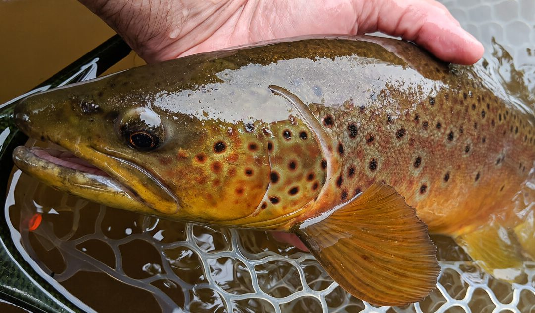 Where to Find Big Trout | Part Three: The Special Buckets
