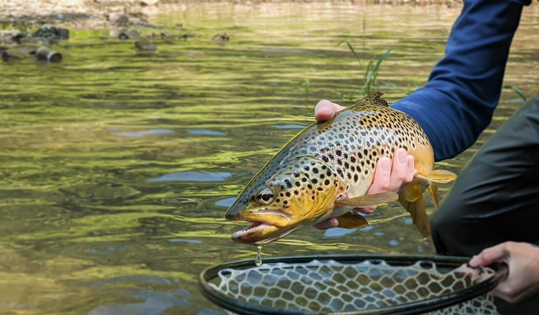 Tight Line and Euro Nymphing: Tracking the Flies