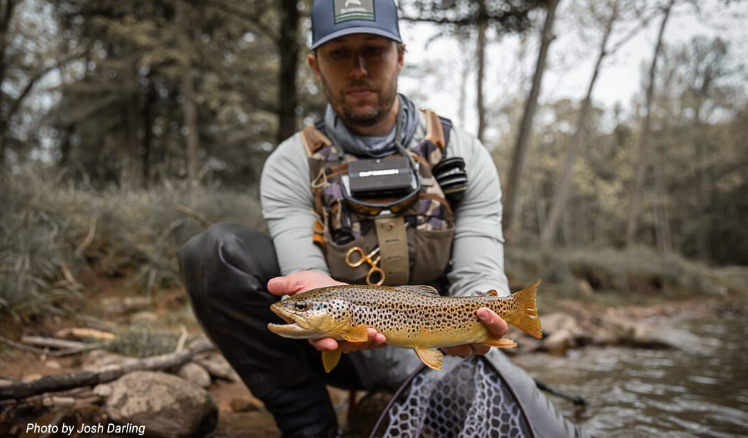 Trout Like To Do What Their Friends Are Doing